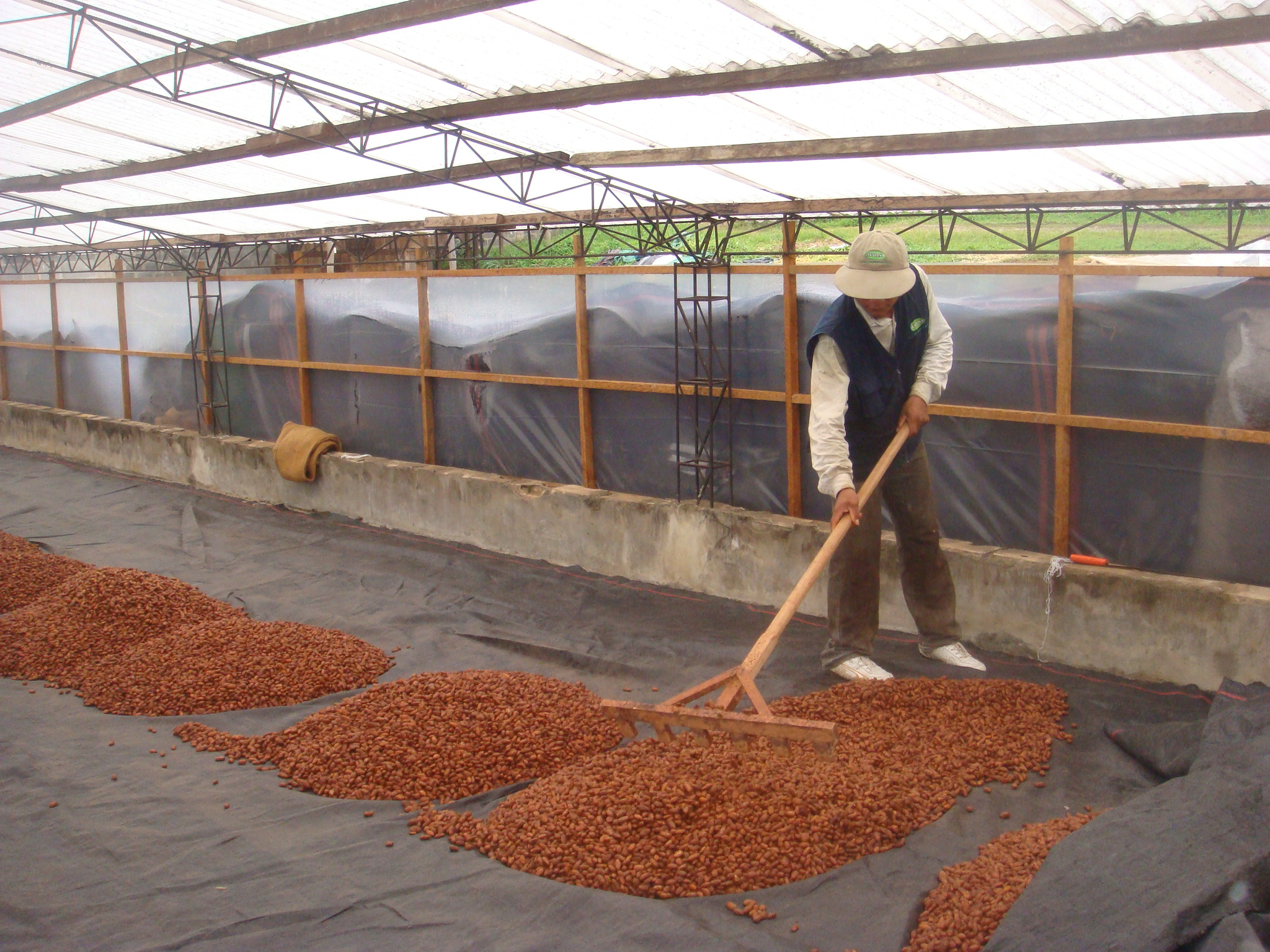 Image result for drying cacao