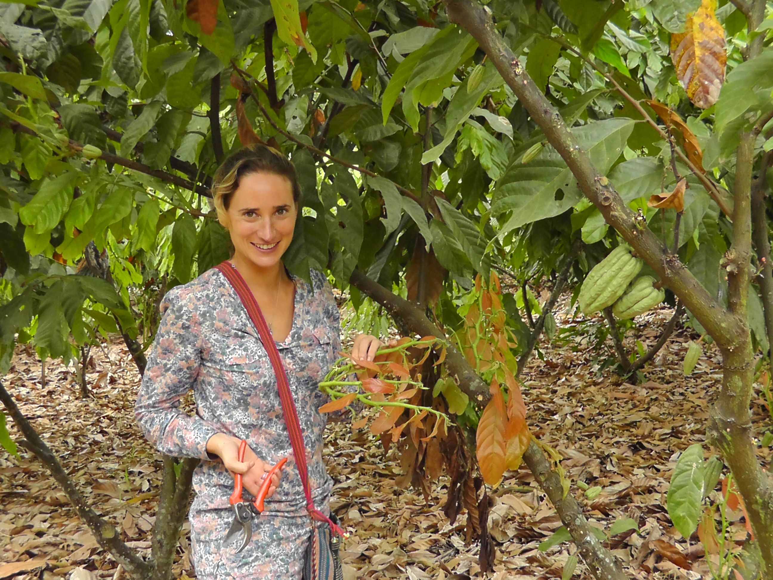 The essentials of cacao tree pruning