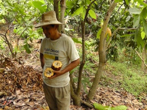 Cocoa Farmer in Piura cocoa growing region
