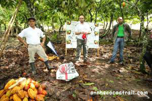 Harvest cocoa workshop