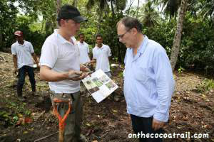 Planting a cocoa tree